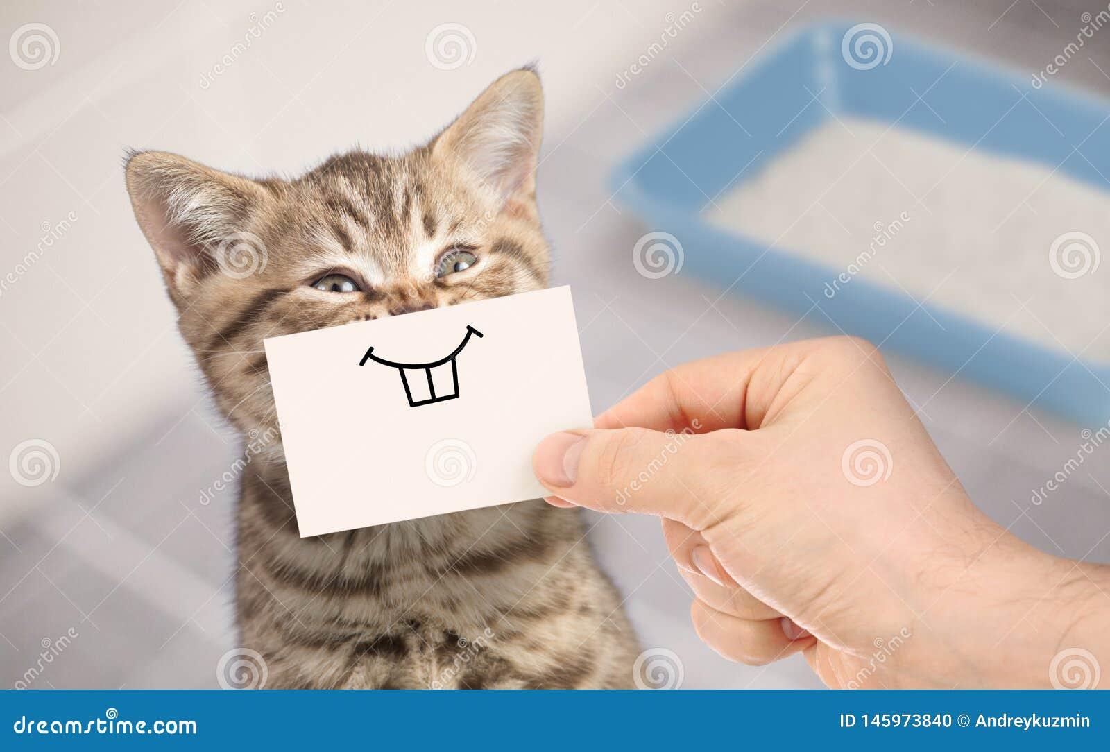 Chat Drole Avec Le Sourire Fou Se Reposant Pres De La Toilette Propre Photo Stock Image Du Toilette Reposant 145973840