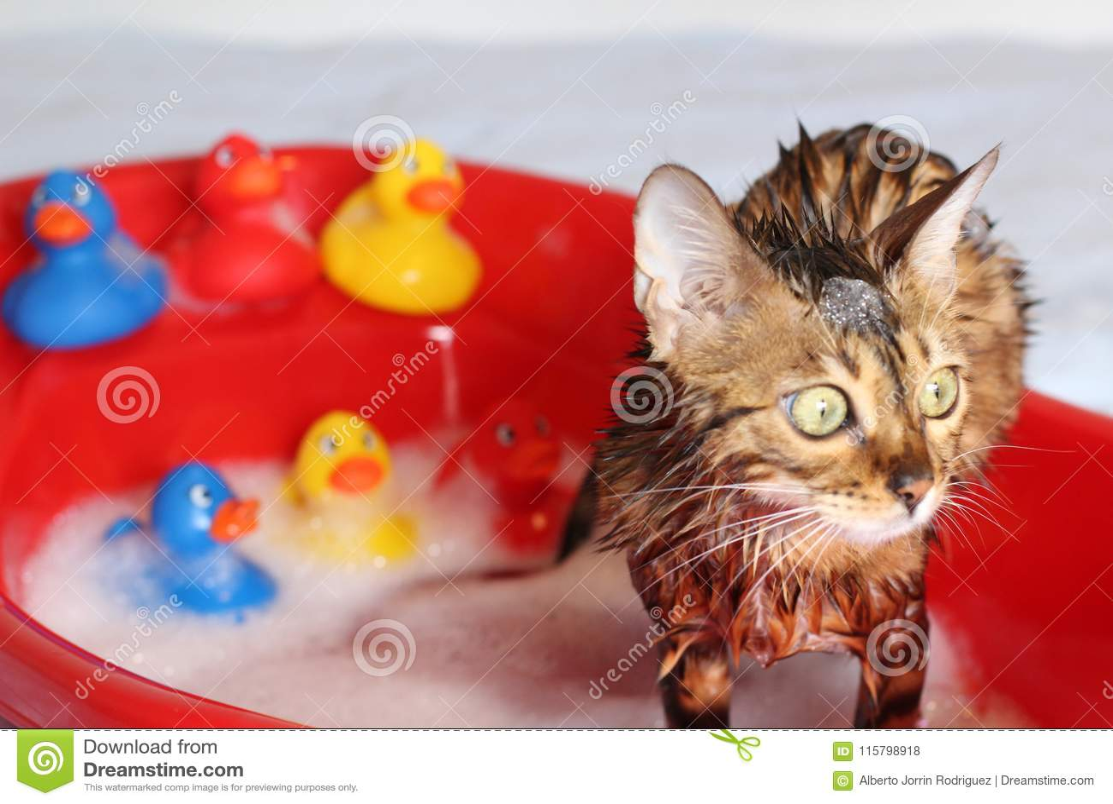 Chat drôle prenant un bain