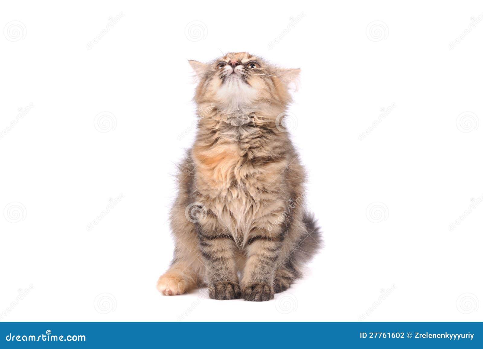 Chat drôle regardant vers le haut