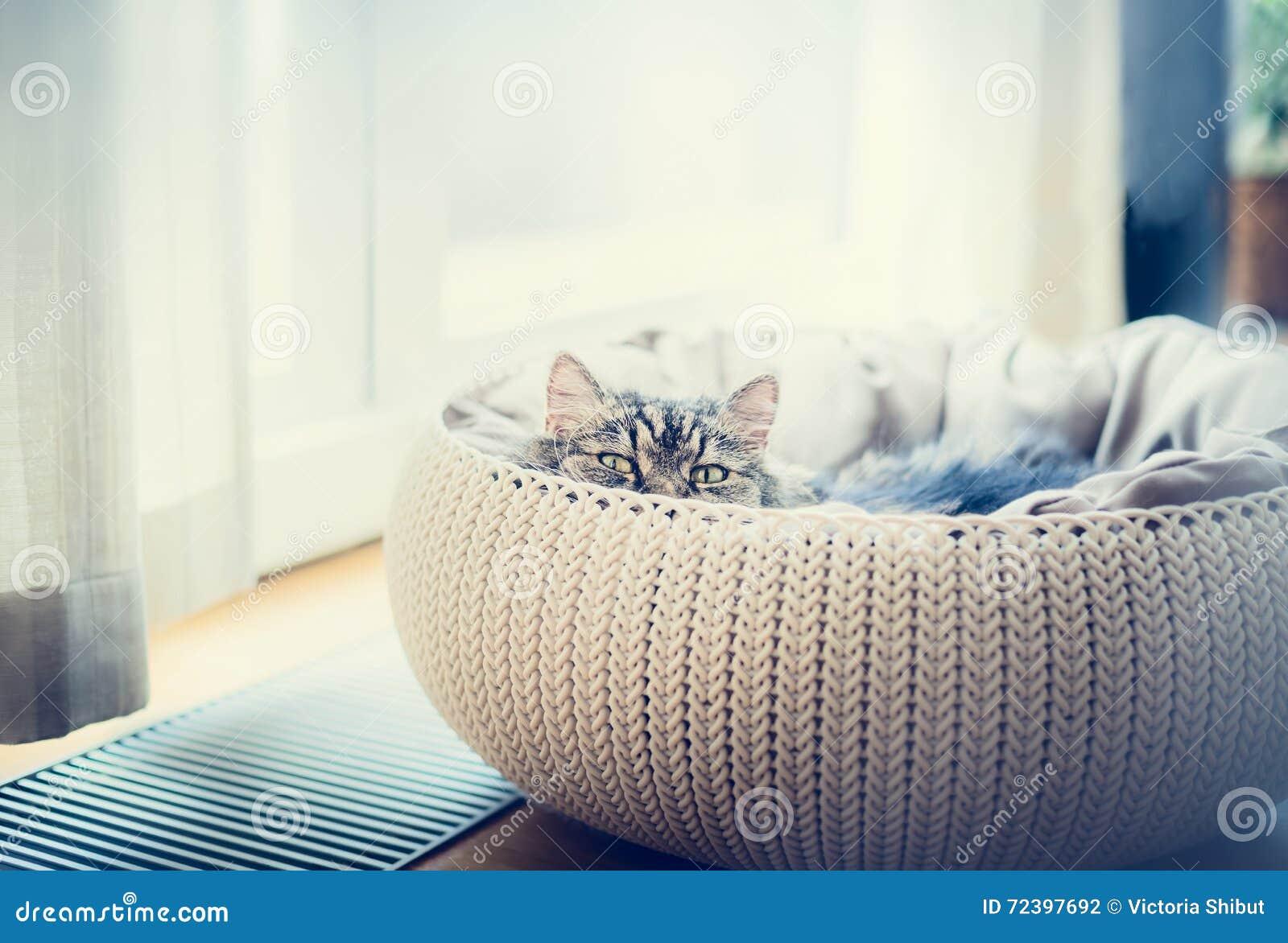 panier chat doux