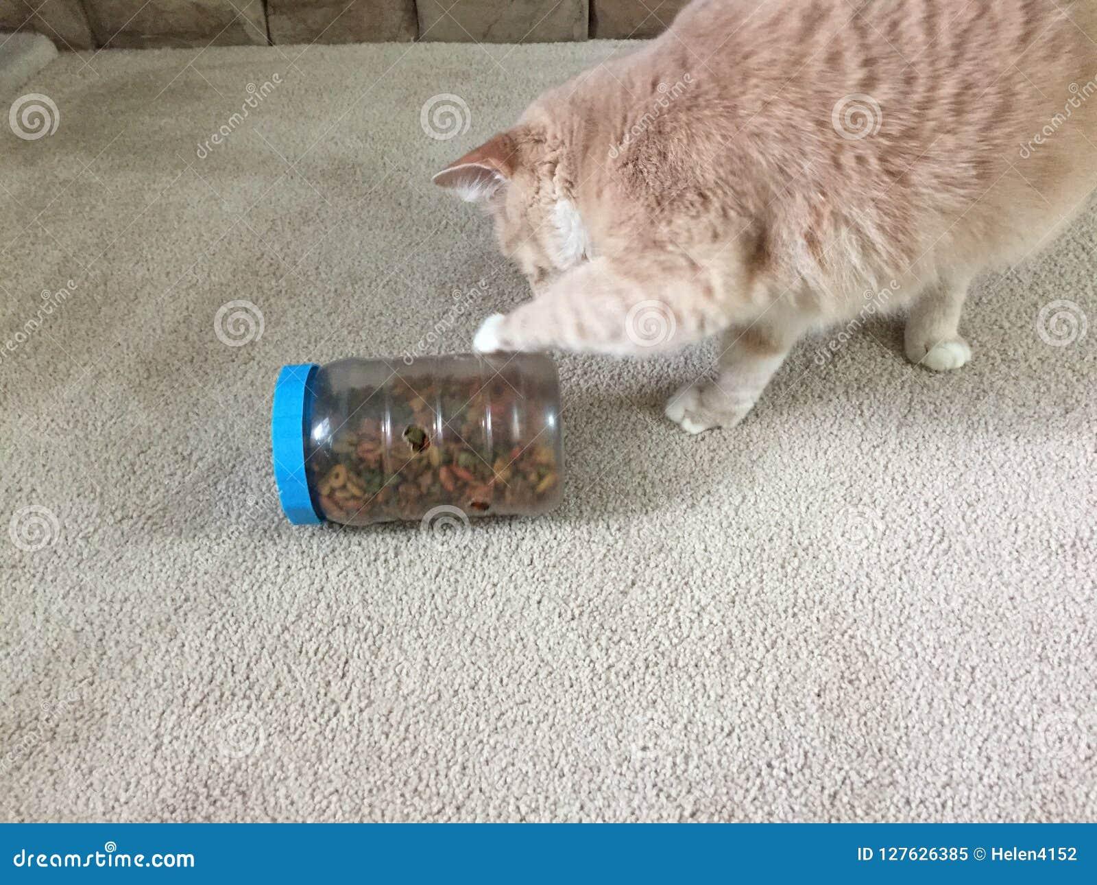 Chat essayant d obtenir des festins hors d un distributeur fabriqué à la main