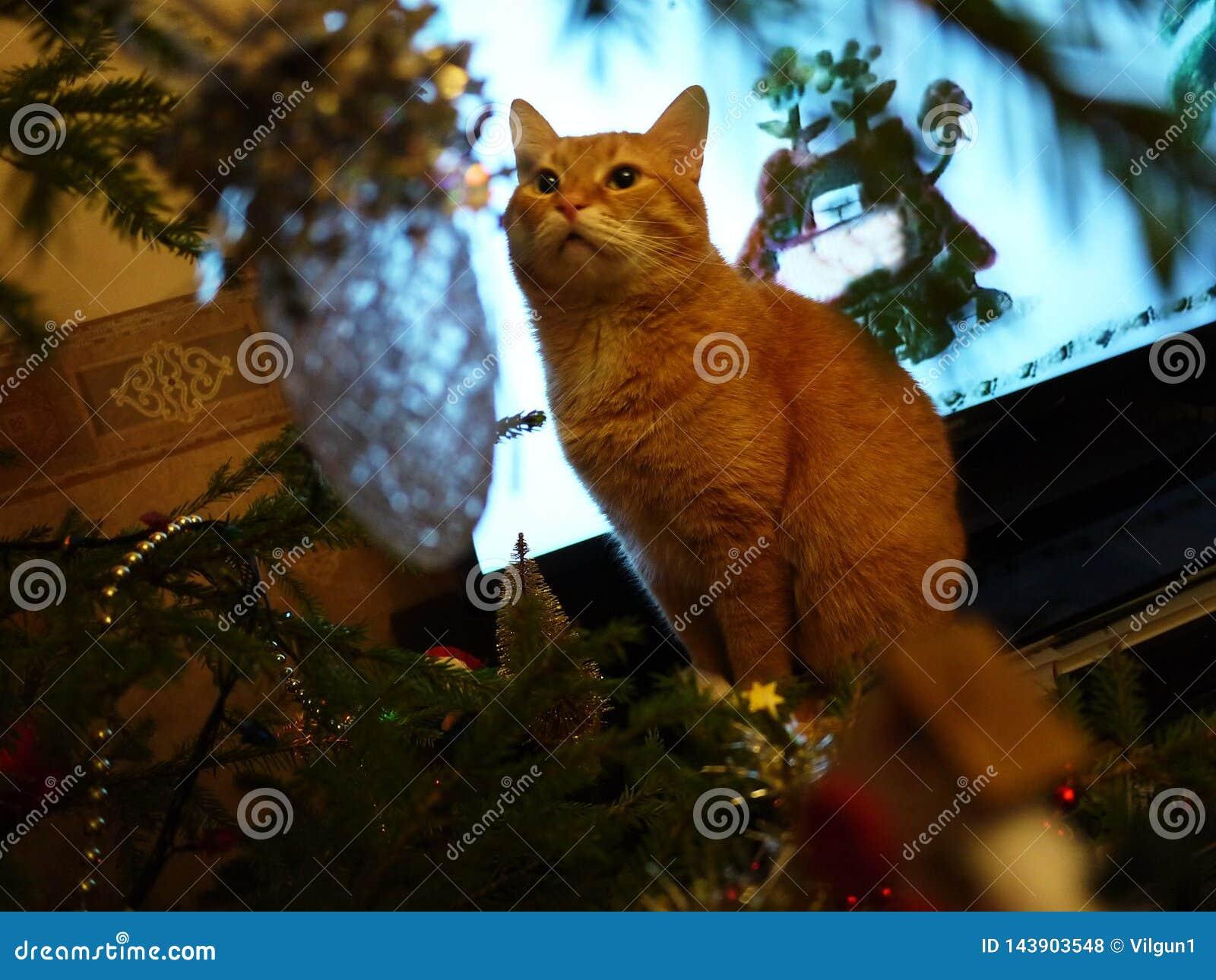 Chat et arbre rouges Beau chat à côté de l arbre de Noël