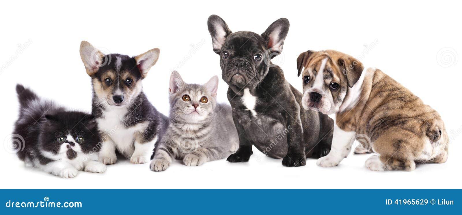 Chat et chien de groupe image stock image du beaut - Com chien et chat ...
