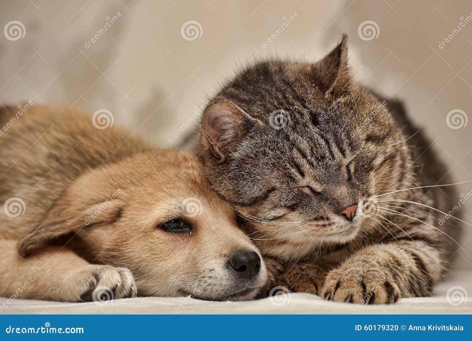 Chat et chiot