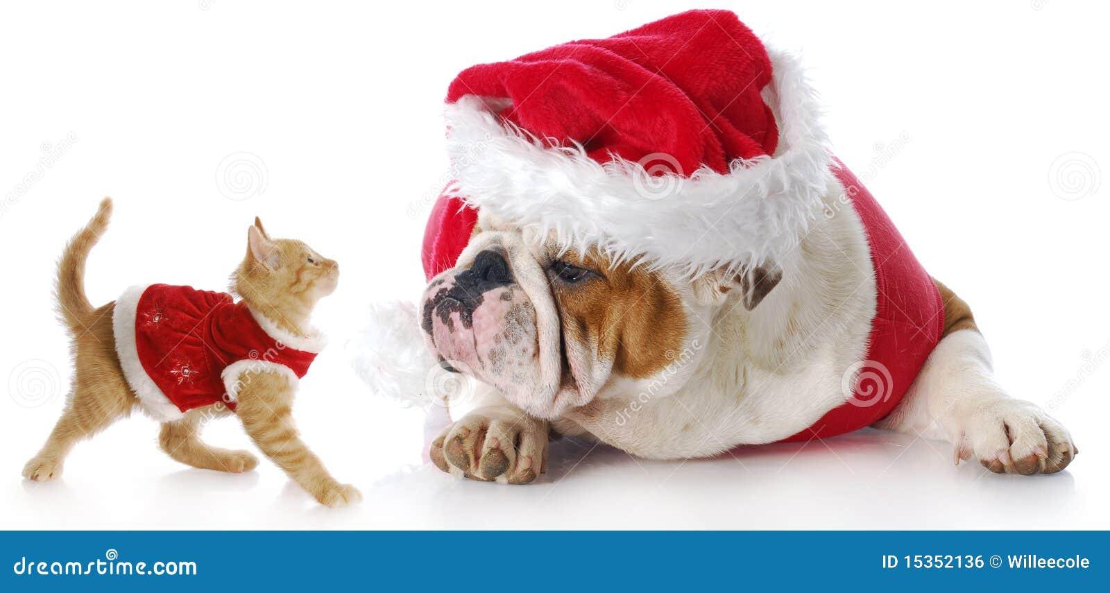 Chat et crabot de Noël