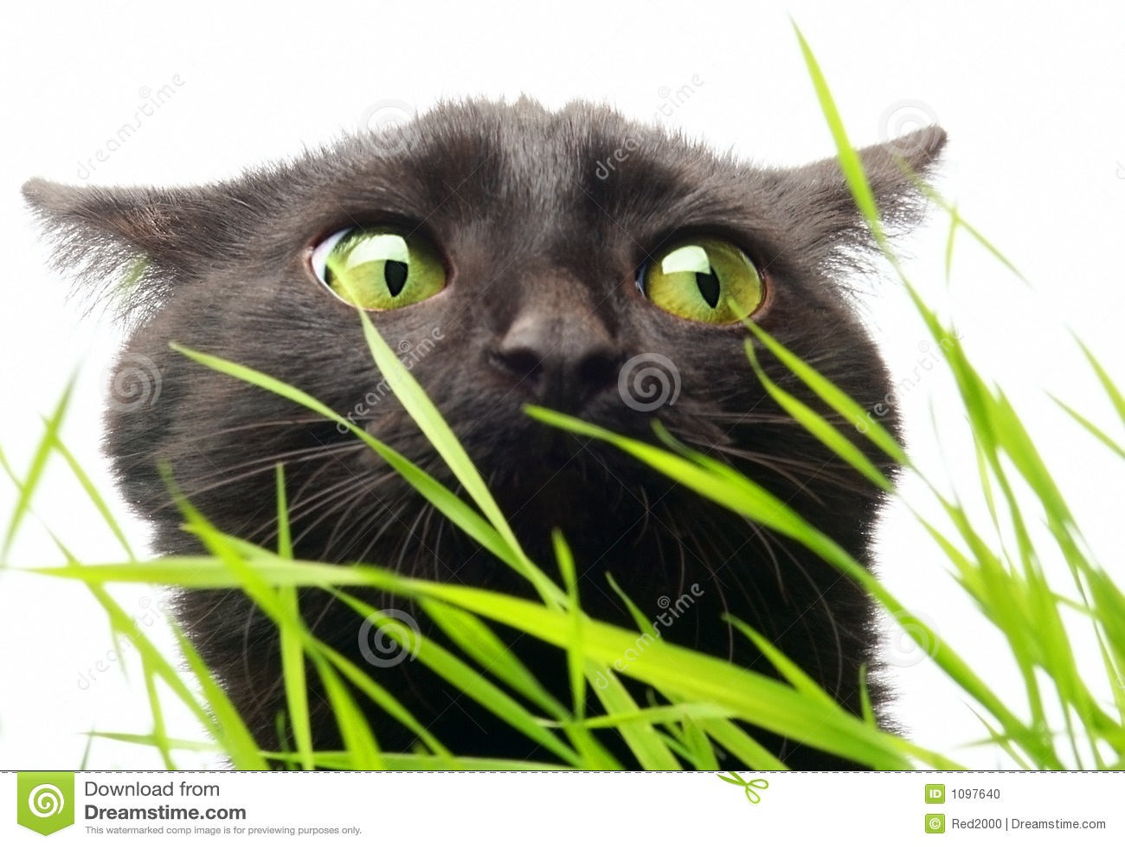 Chat et herbe