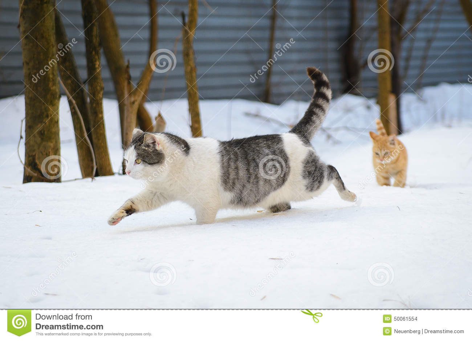 Chat et Kitten Running dans la neige