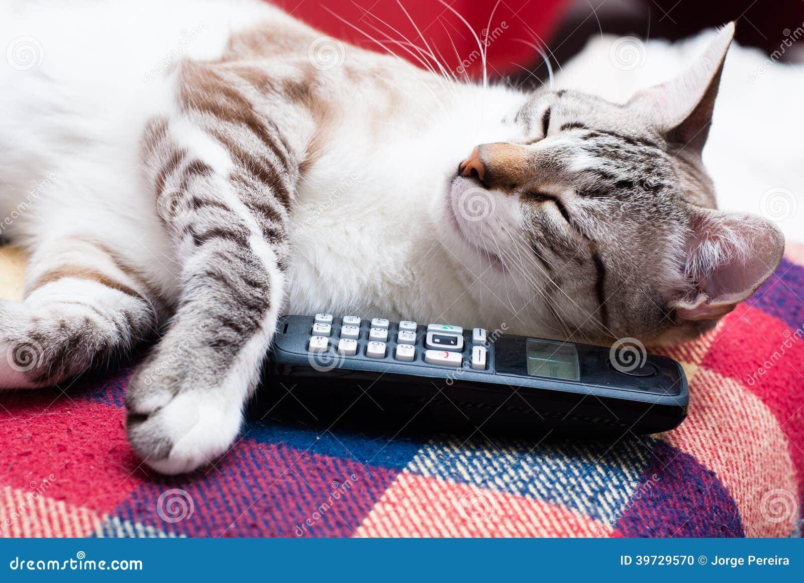 Chat et téléphone