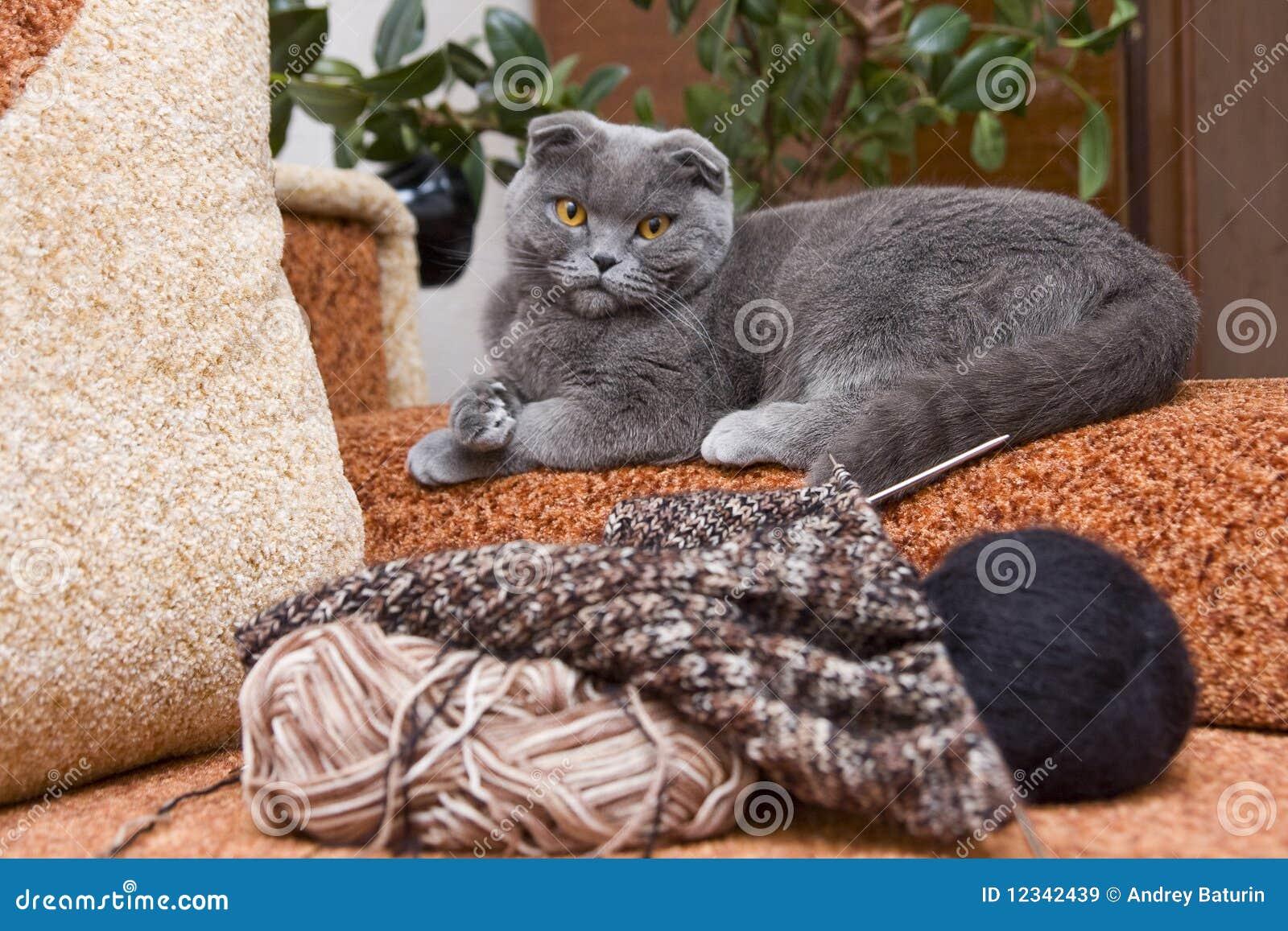 Chat et tricotage sur le sofa