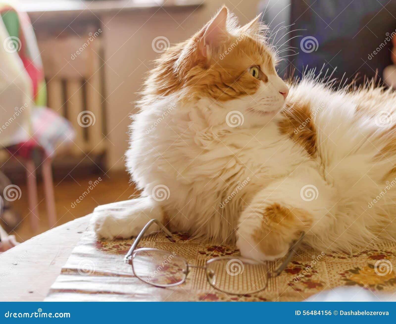 Chat et verres sur la table