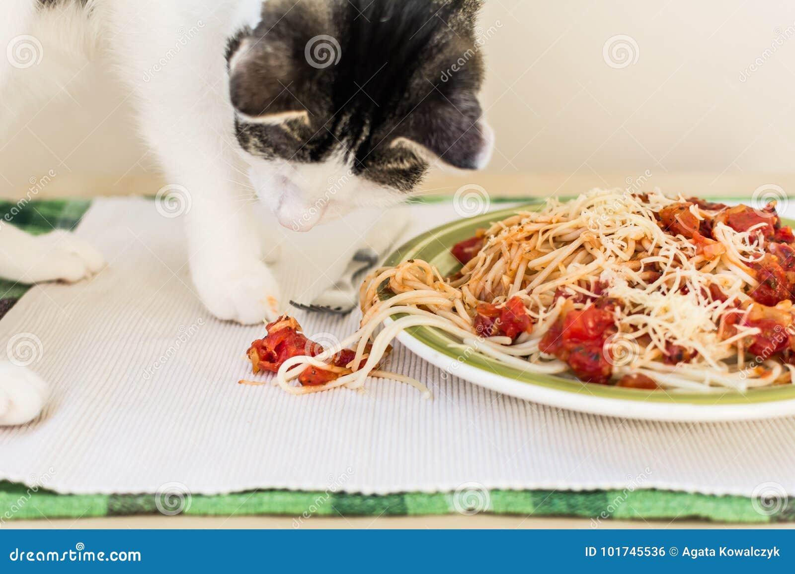 Chat faisant le désordre sur une table