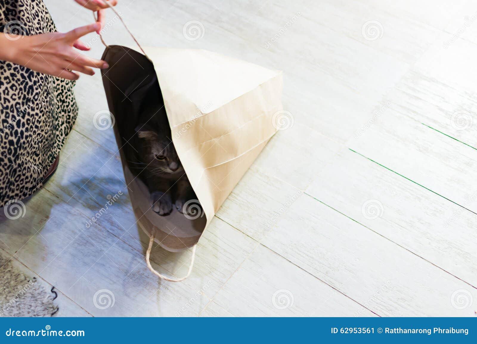 Chat grincheux jouant le cache-cache dans un sac de papier