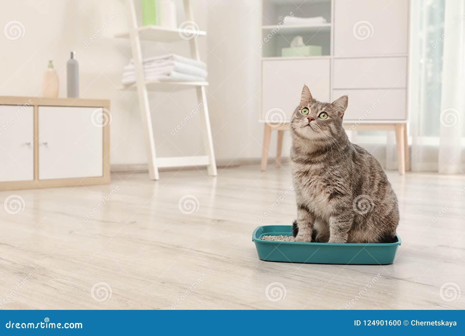 Chat gris adorable dans la poubelle à l intérieur