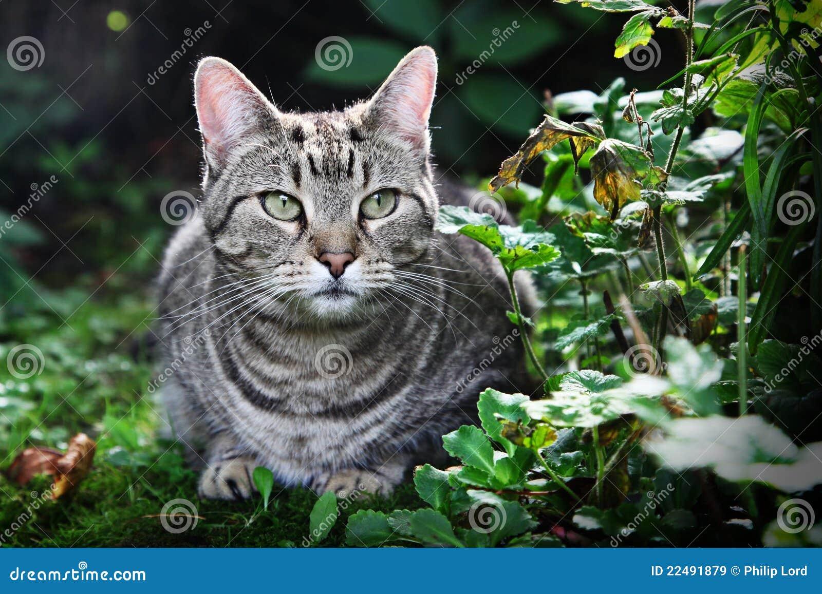 chat gris dans l 39 herbe image stock image du outside 22491879. Black Bedroom Furniture Sets. Home Design Ideas