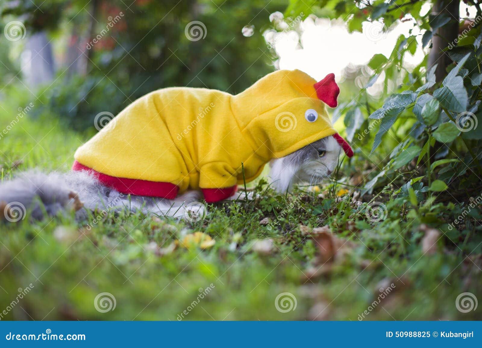Chat habill comme poulet dans le jardin image stock for Dans le jardin