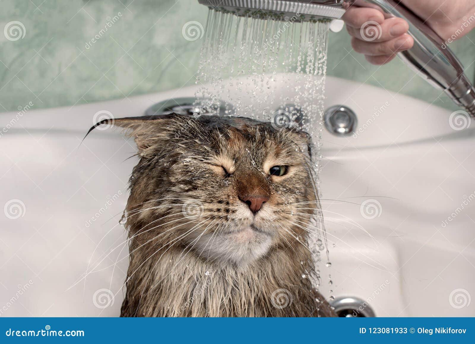 Chat humide dans le bain