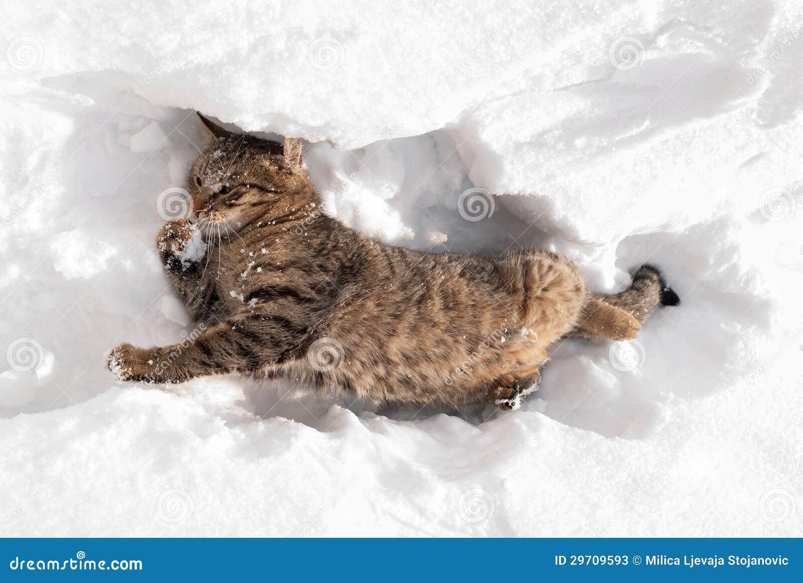Chat jouant avec la neige