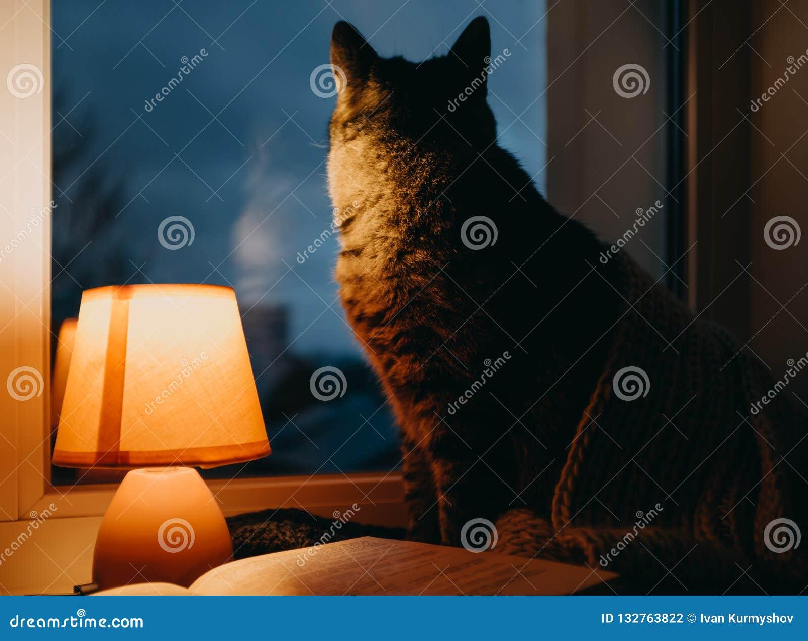 Et ChatLampe De Livre Crépuscule Confortable Dans Maison Le Table 1KcT3lJF