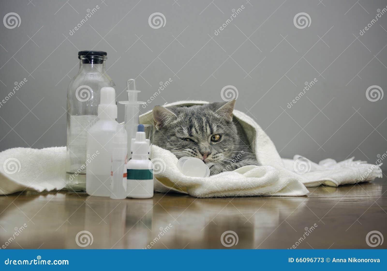 Chat malade sur une table avec des médecines