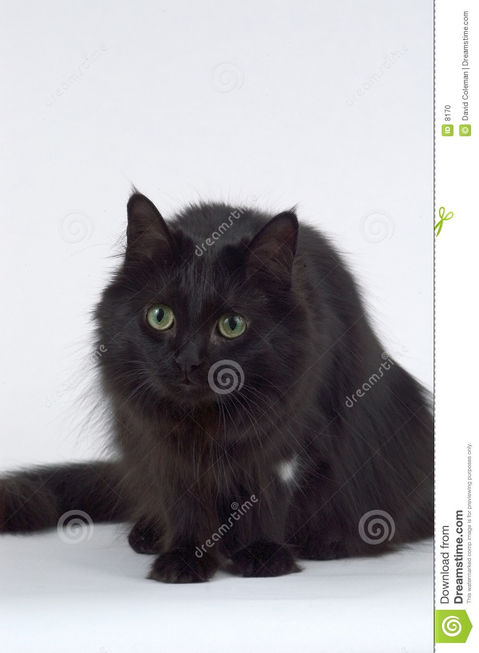 Chat malfaisant