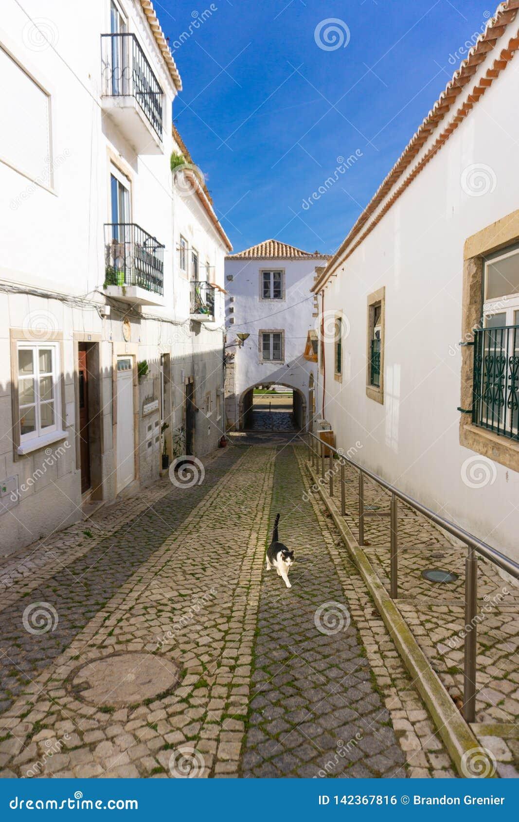 Chat marchant dans la belle architecture traditionnelle de Lagos Portugal