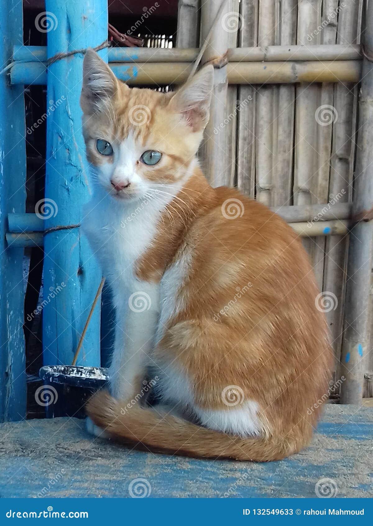 chat marocain sans inscription