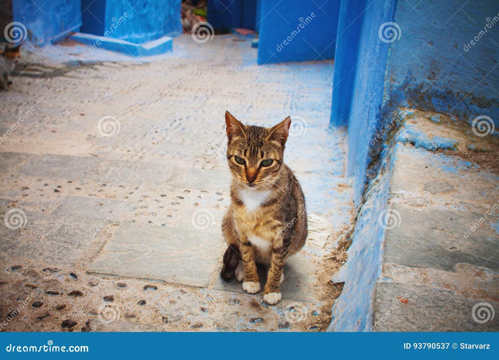 sites de chat marocain sans inscription montpellier rencontres du court