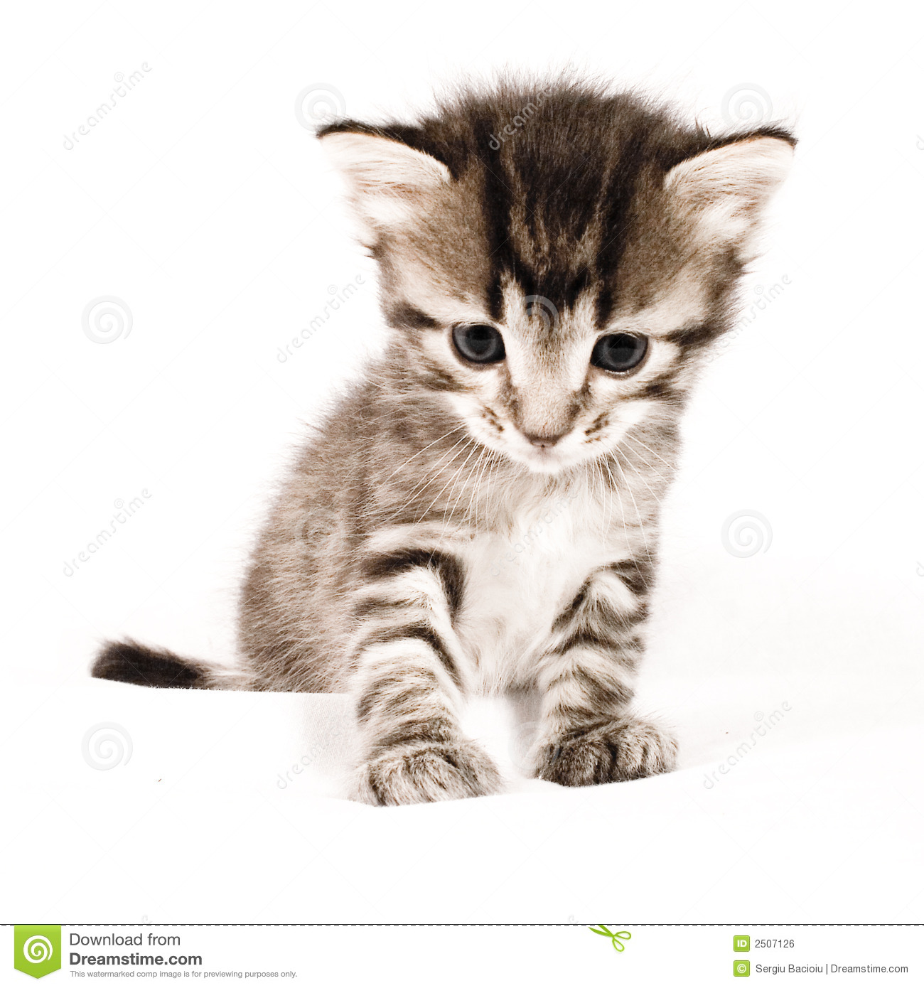 Chat mignon photo stock image du f lin pets chatons - Image des mignon ...
