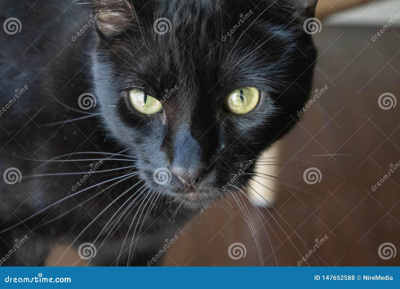 Chat noir avec les yeux jaunes