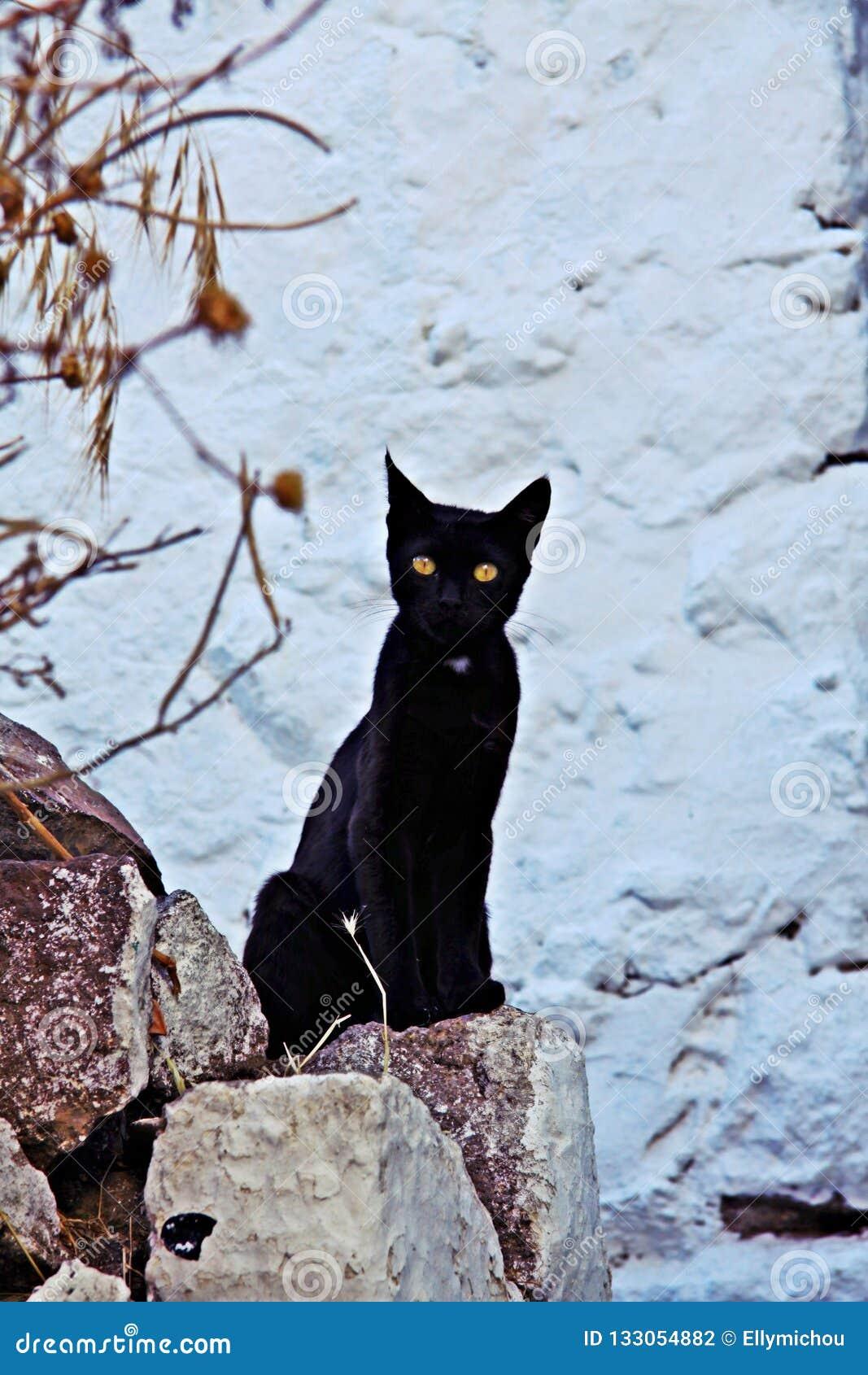 Chat noir curieux