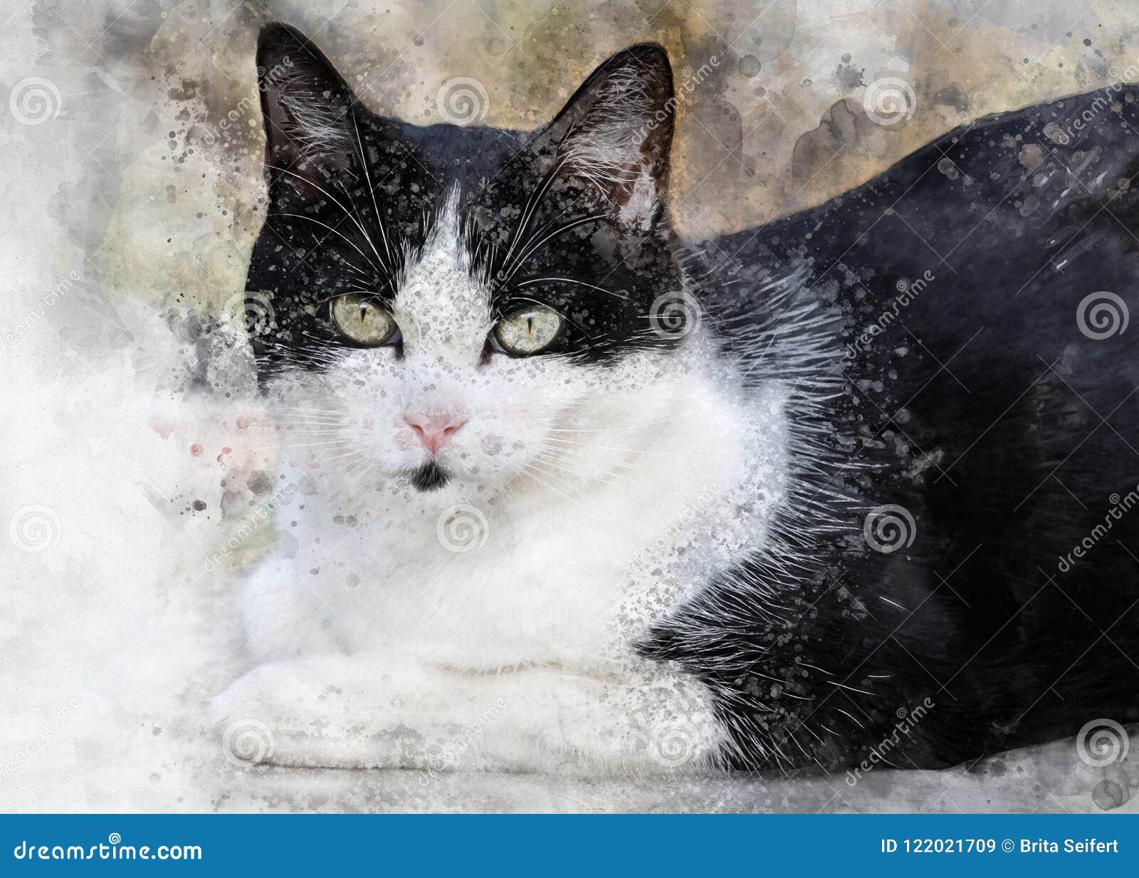 Chat Noir Et Blanc Mignon Avec De Grands Yeux Image Stock