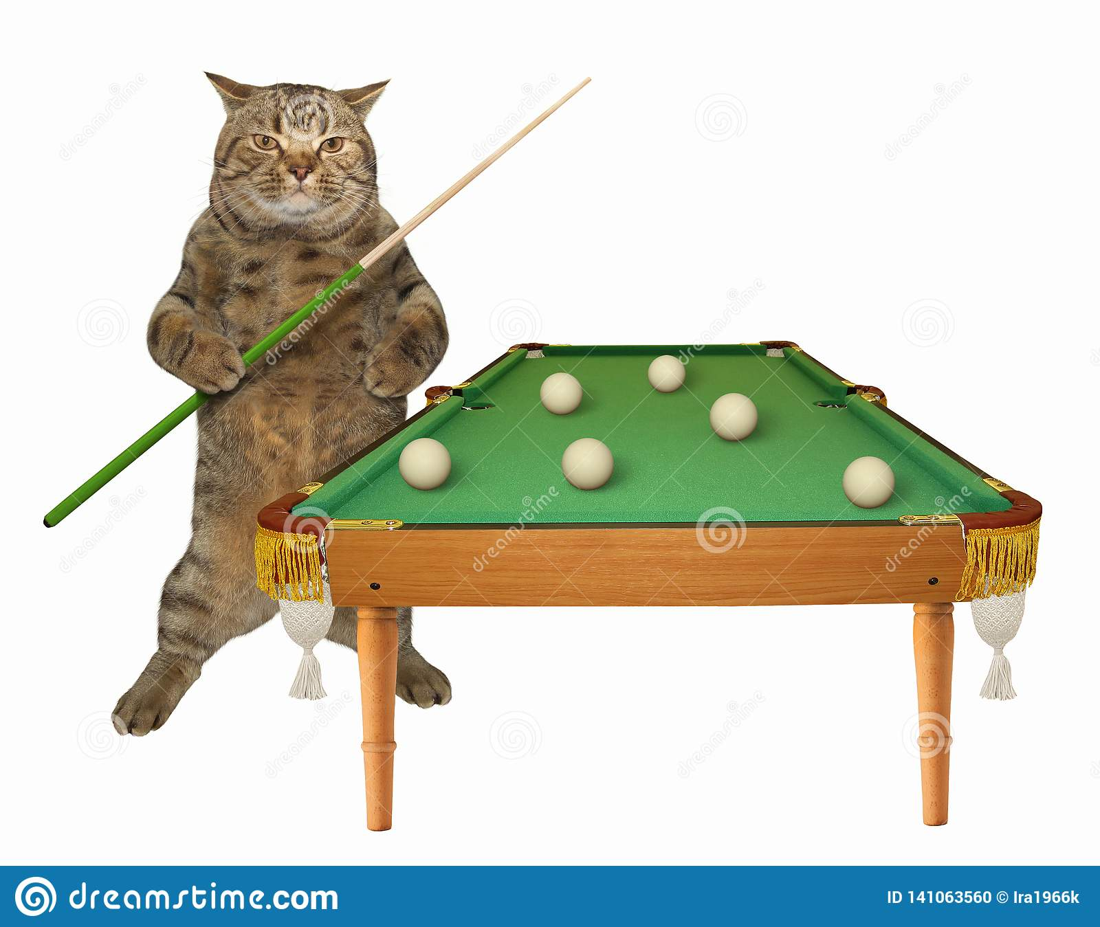 Chat près de la table de billard