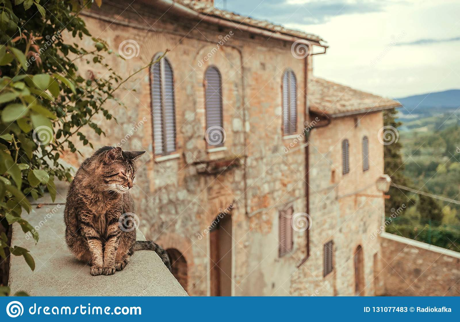 Chat refroidissant la cour intérieure du manoir rural d ot de maison à la soirée Toscane Arbres verts, collines de campagne de l