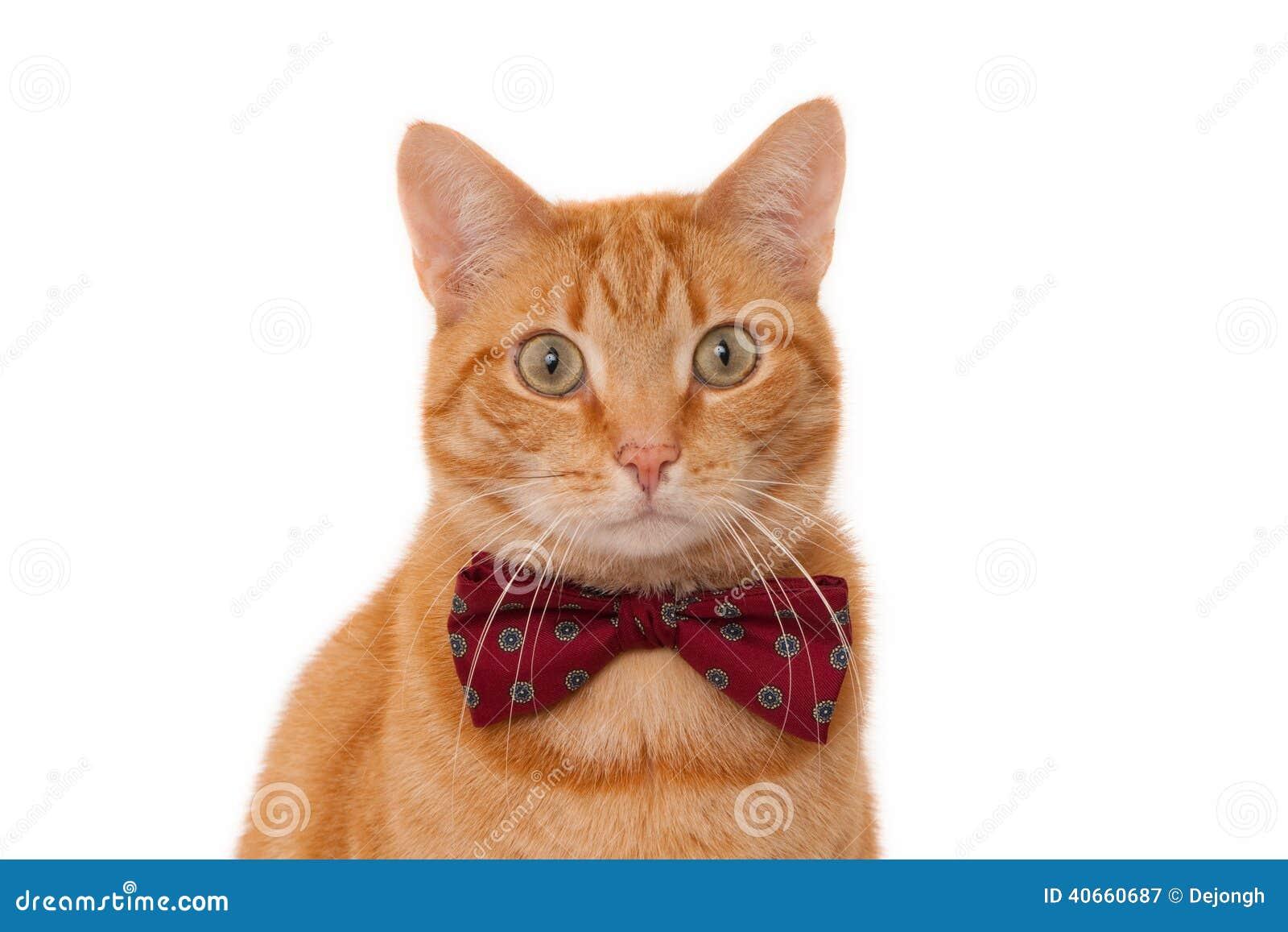 chat rouge avec le noeud papillon
