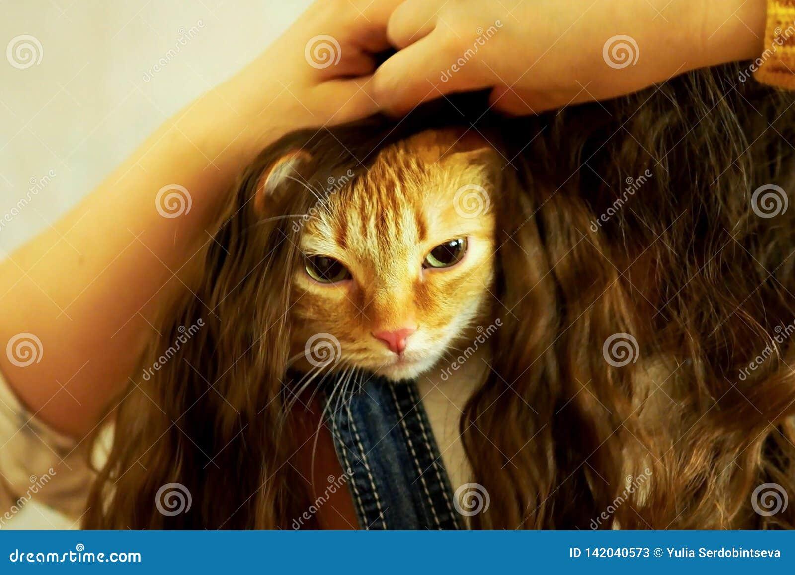 Chat rouge caché dans les cheveux de la fille