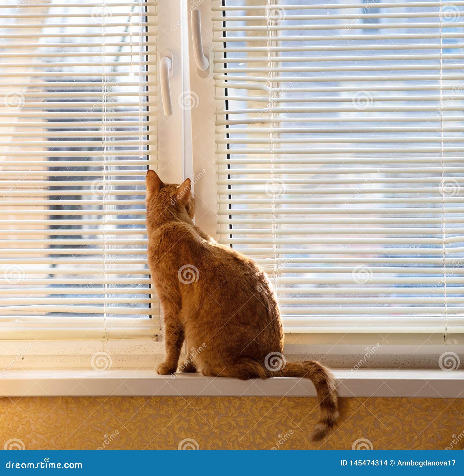 Chat rouge sur la fenêtre au printemps