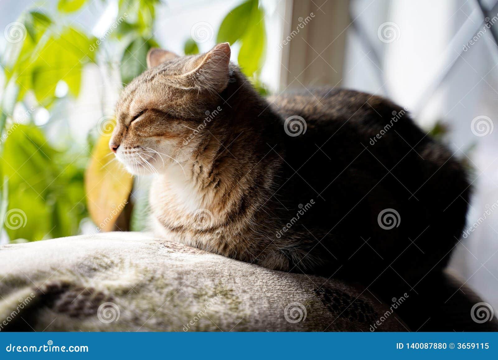 Chat se reposant près de la fenêtre