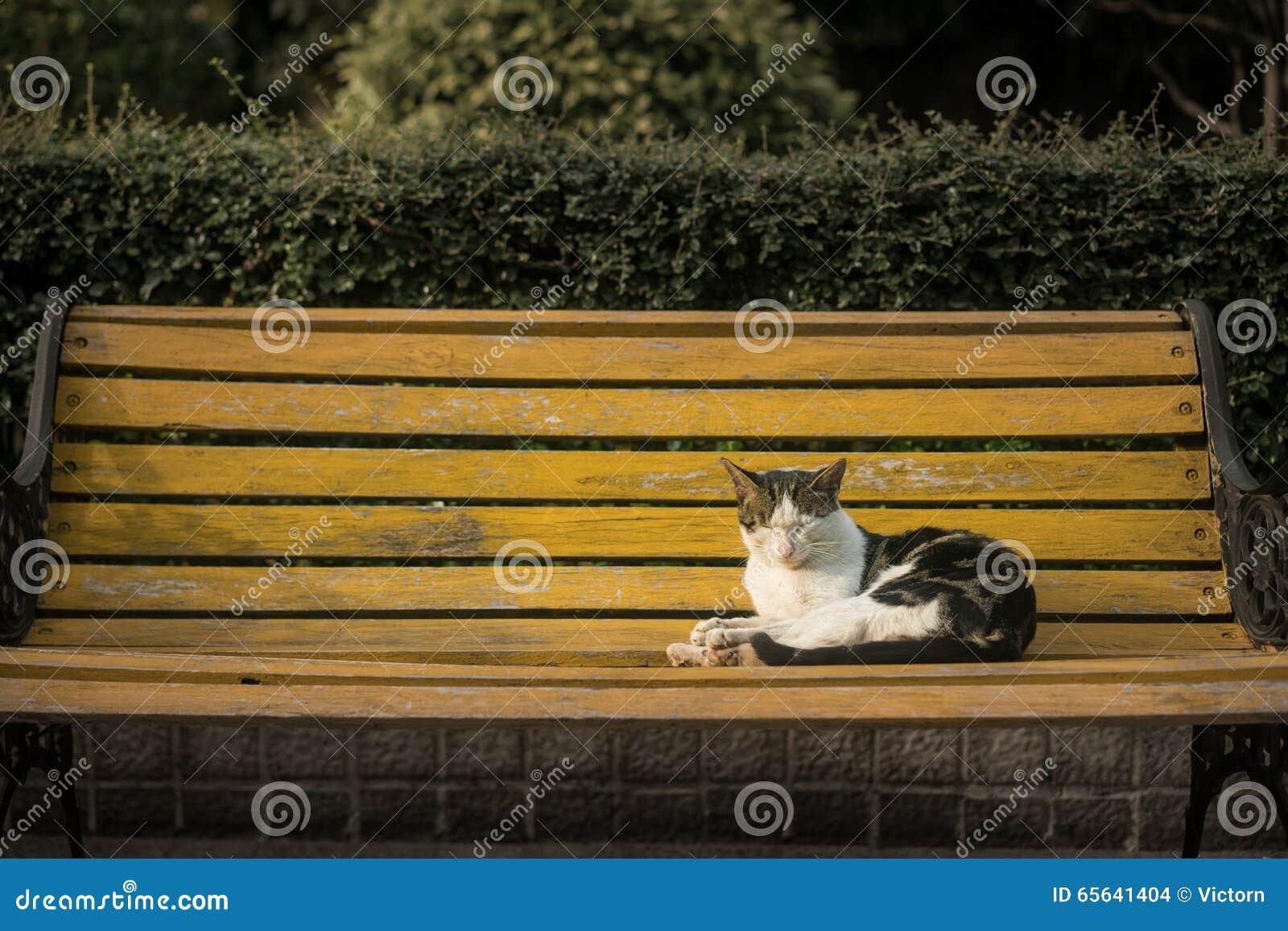 Chat se reposant sur un banc