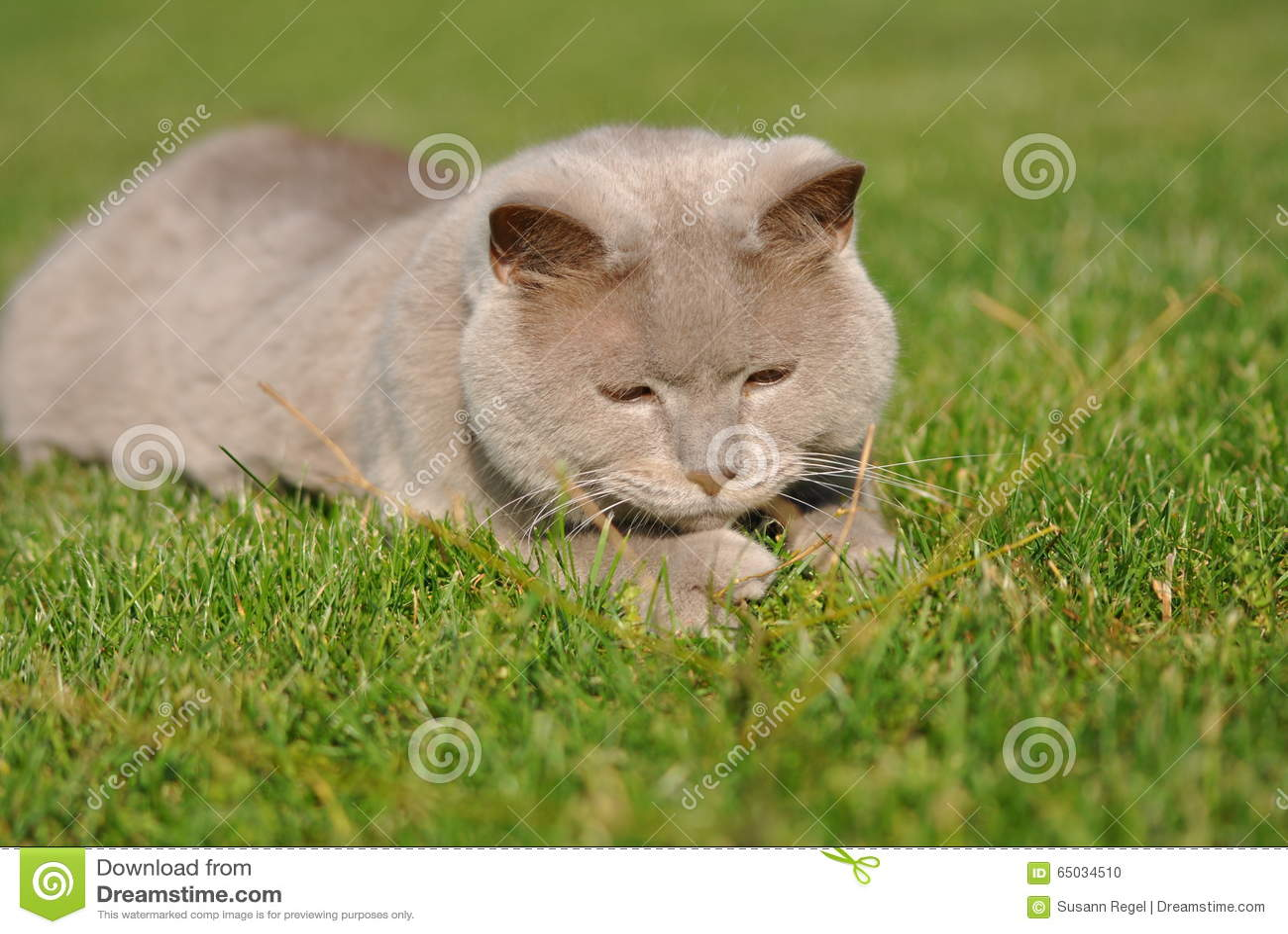 Chat se trouvant sur l herbe