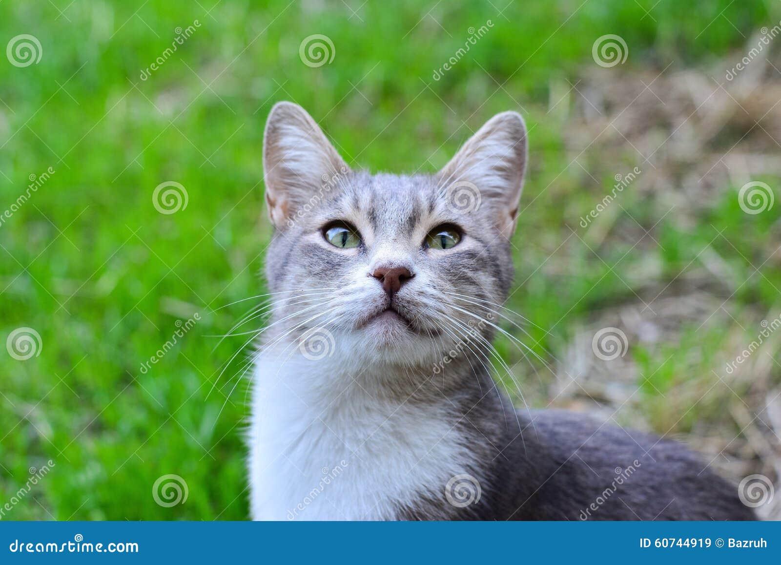 chat sur l 39 herbe verte dans le jardin photo stock image 60744919. Black Bedroom Furniture Sets. Home Design Ideas