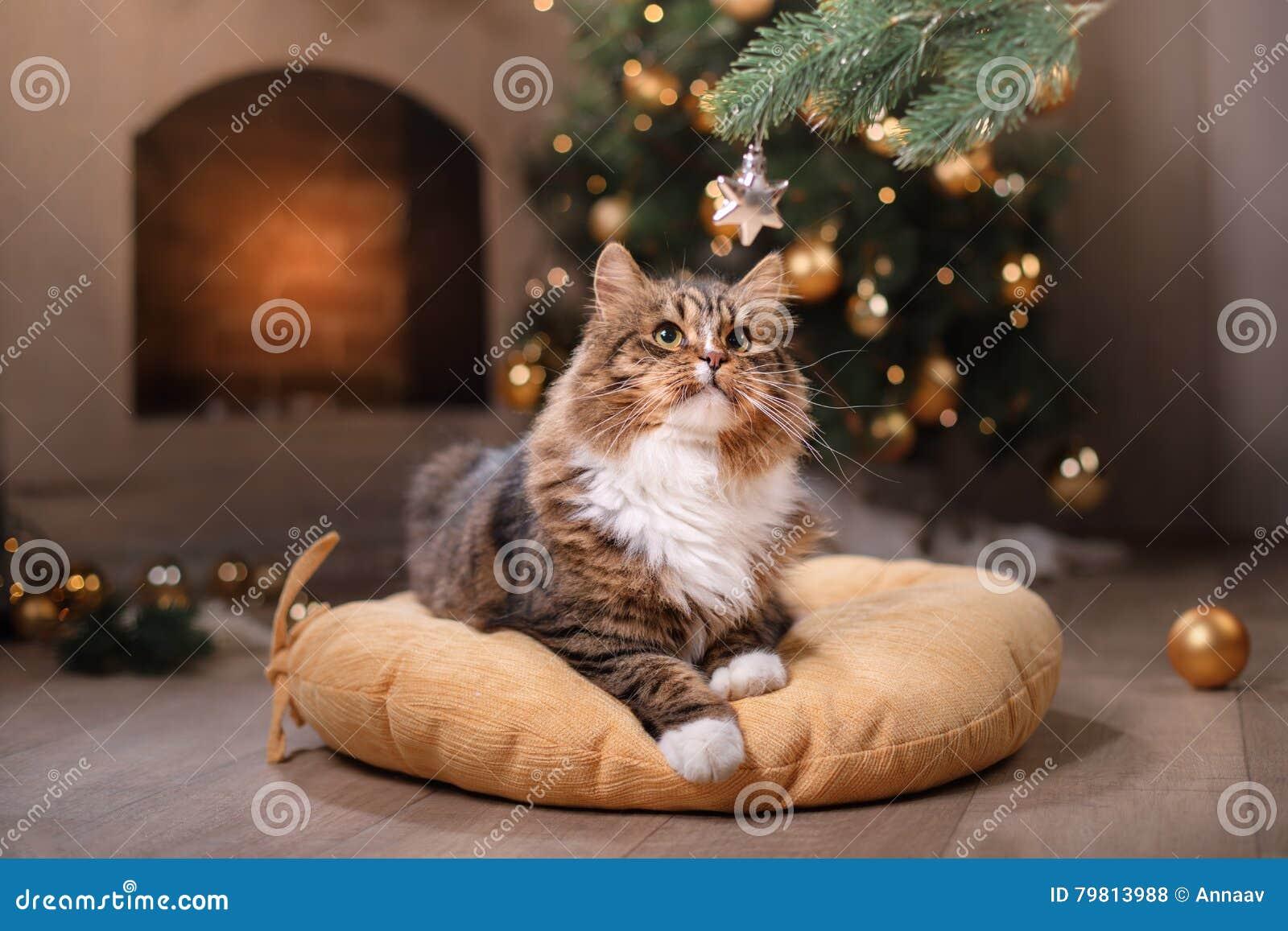 Chat tigré et heureux Saison 2017, nouvelle année de Noël