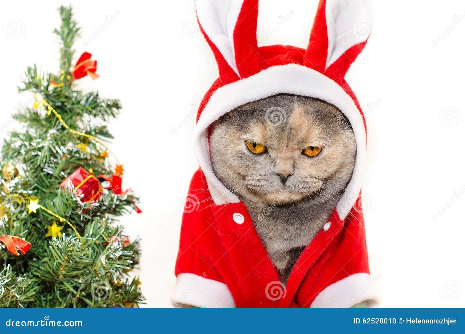 Chat triste de Noël