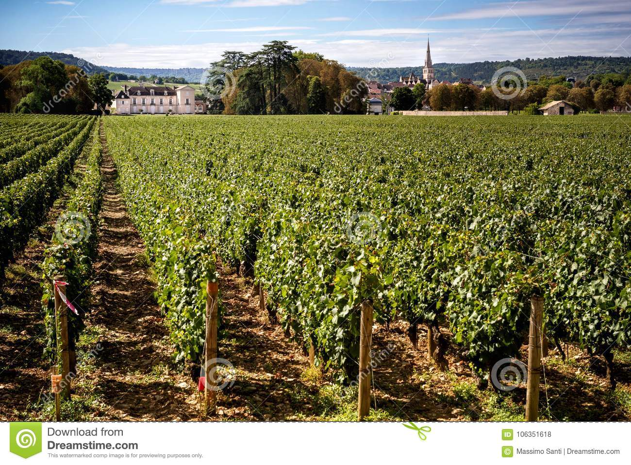Chateau with vineyards, Burgundy, Montrachet.France
