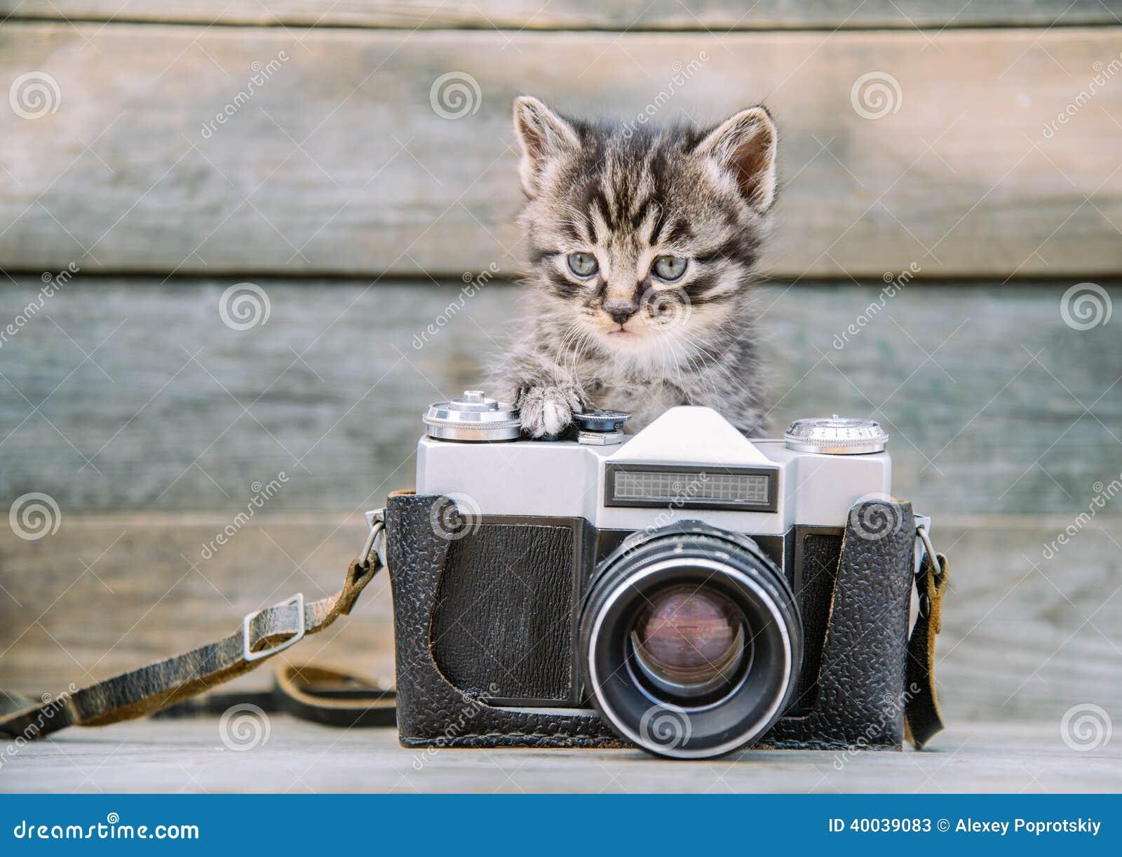 Chaton avec l appareil-photo de photo de vintage
