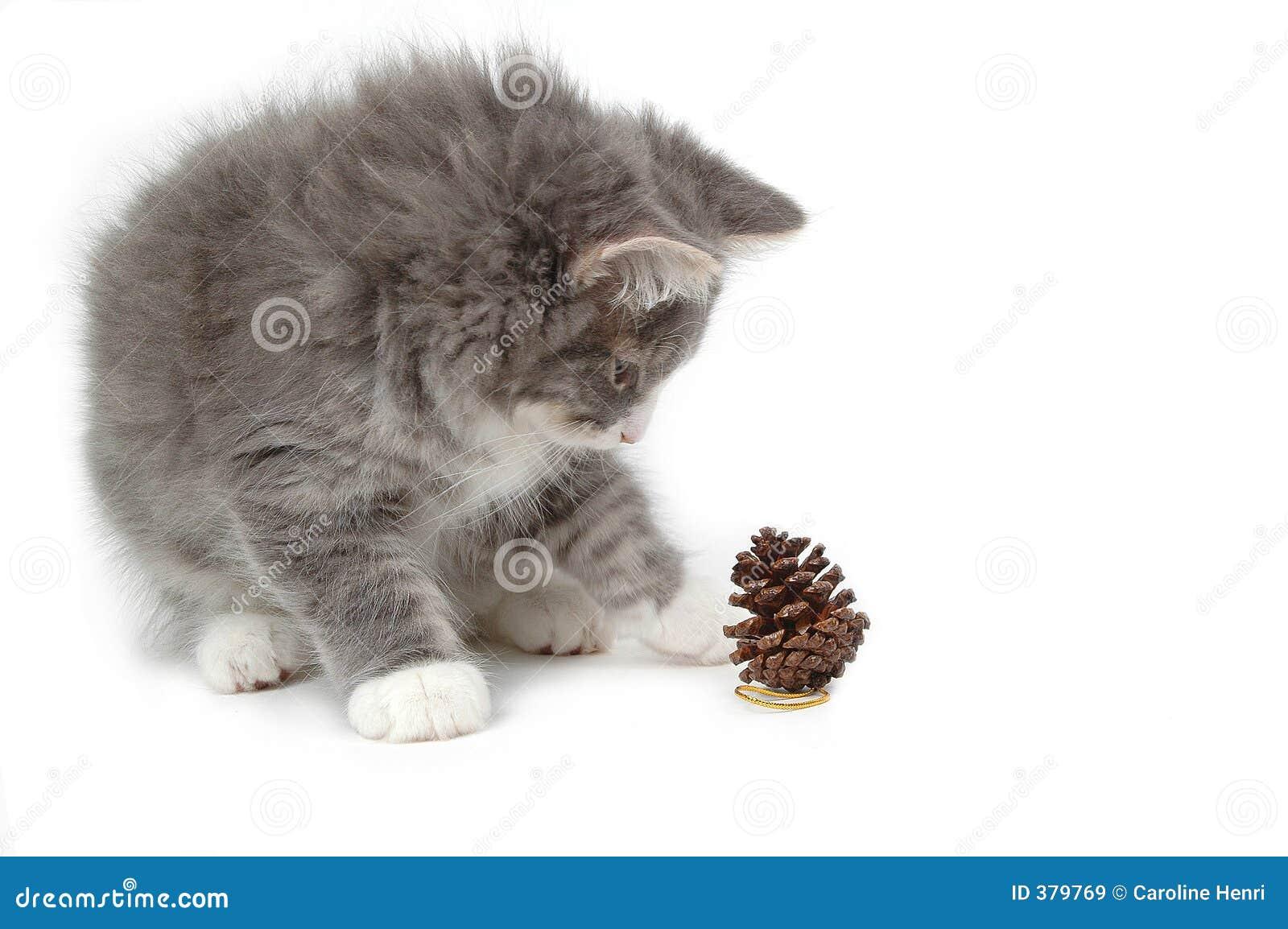 Chaton avec le cône de pin de Noël