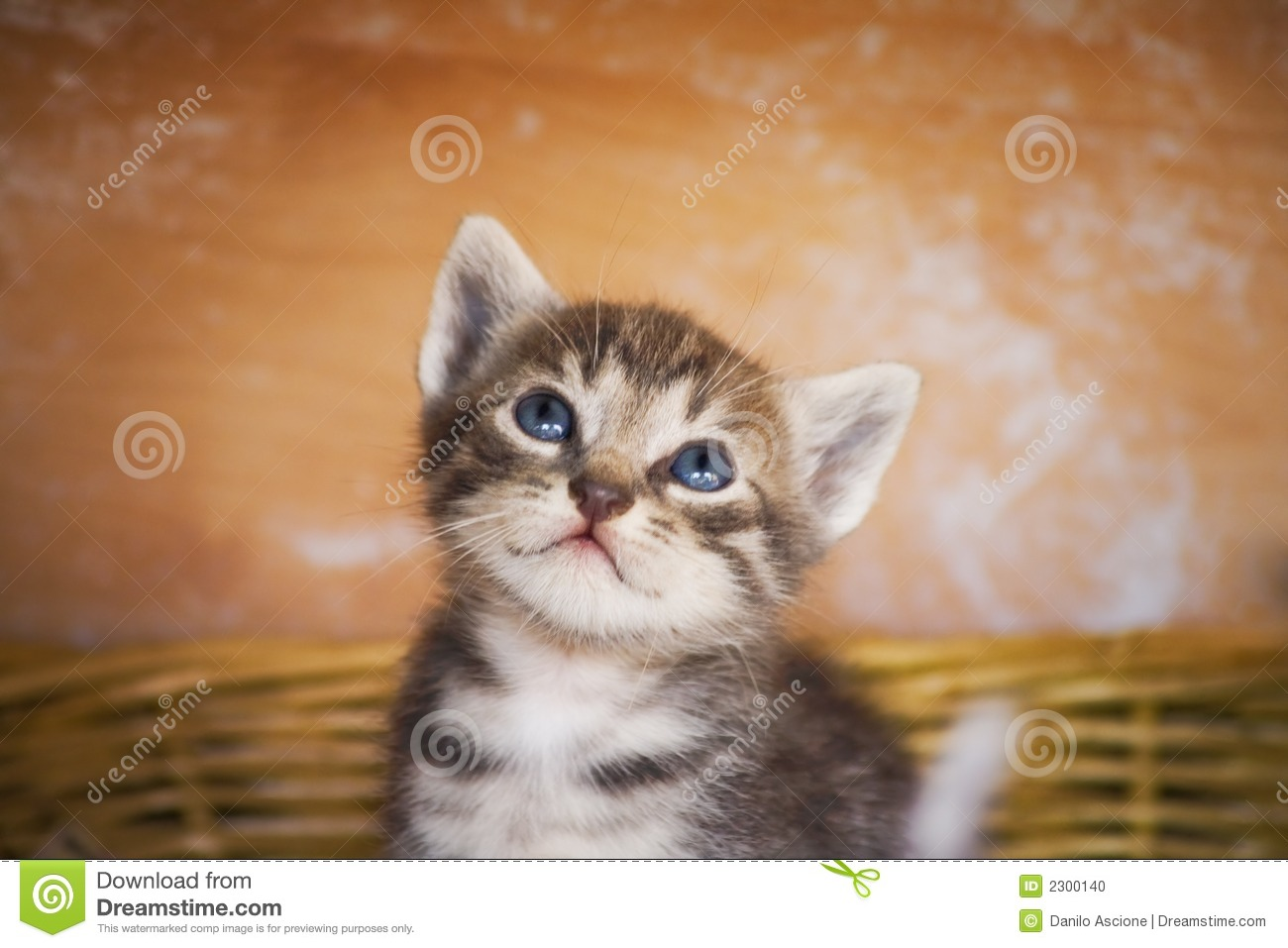 Chaton curieux