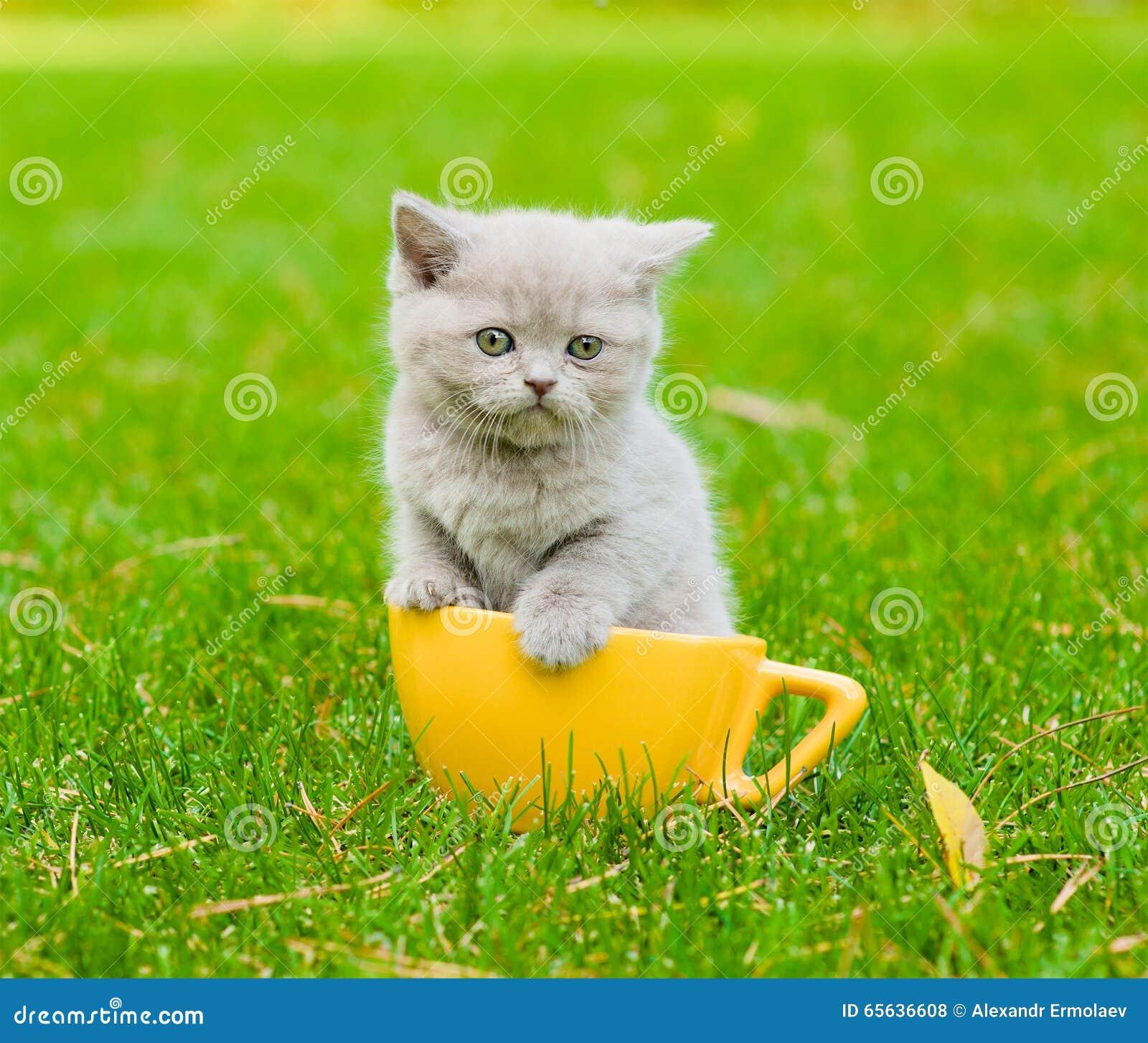 Chaton dans la grande tasse sur l herbe verte