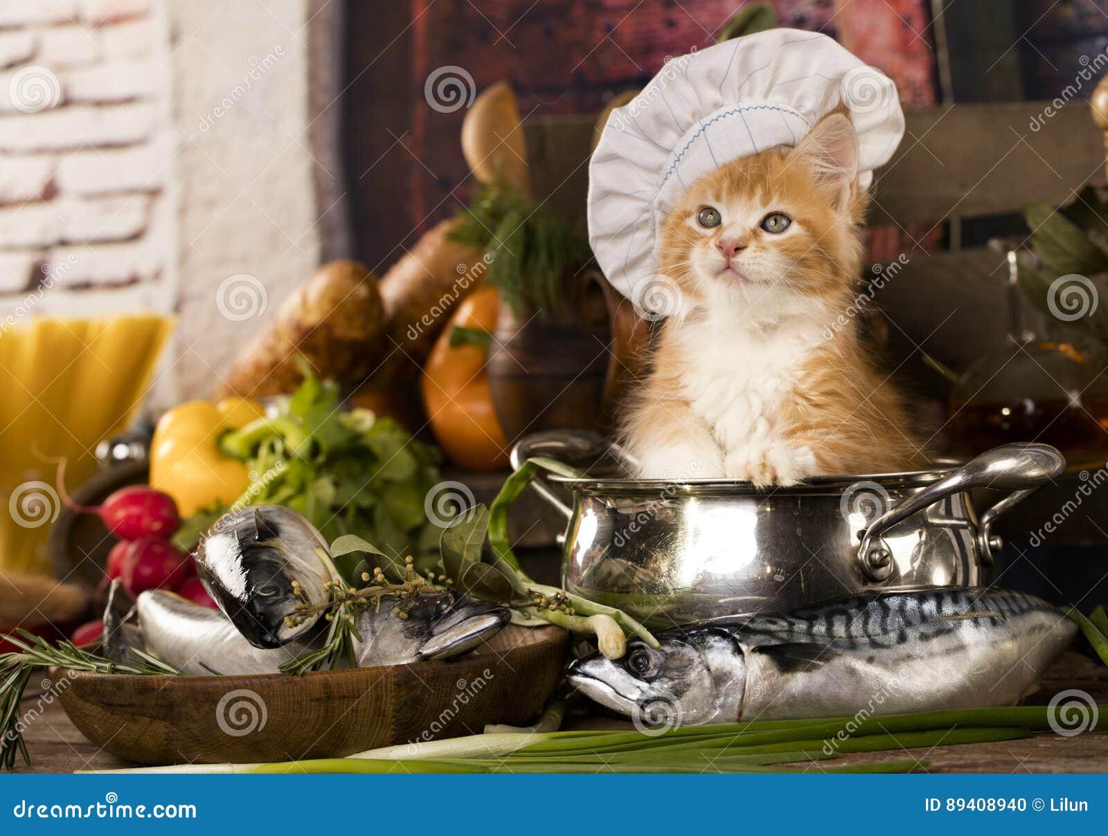 Chaton dans un chapeau du s de cuisinier photo stock for Cuisinier chapeau noir