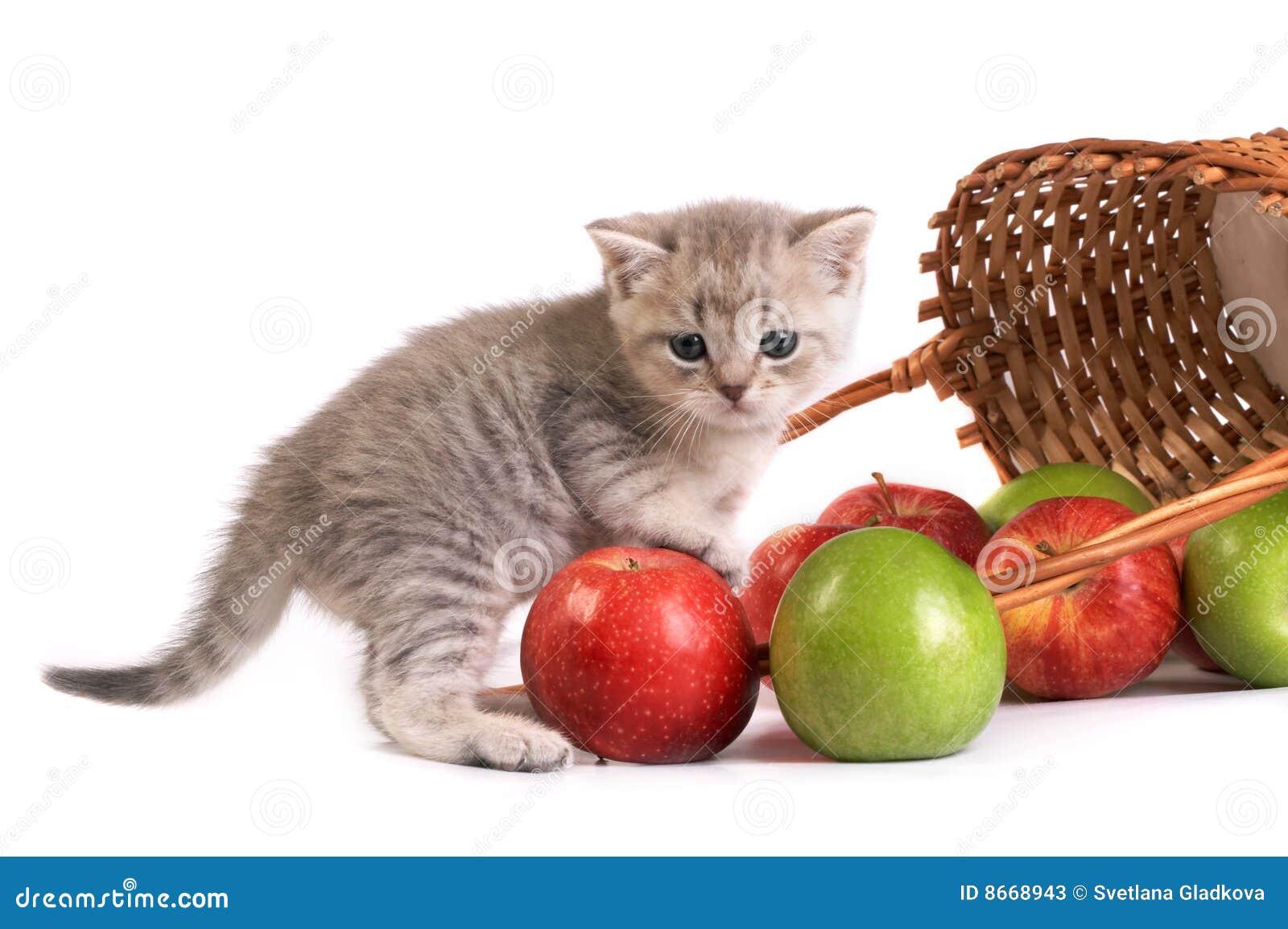 Chaton et un panier avec des pommes
