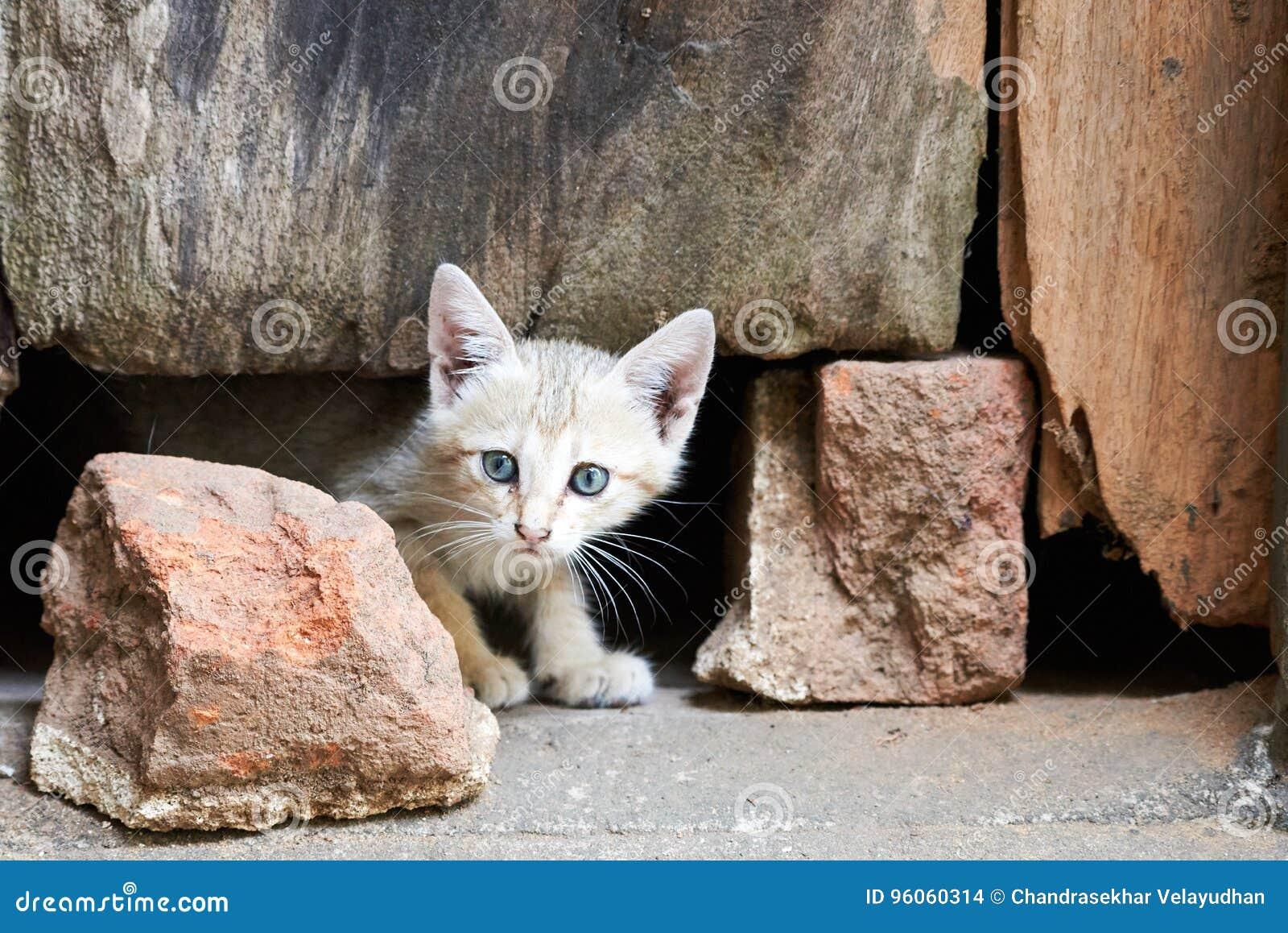 Chaton gris avec les yeux piercing regardant de dessous une porte